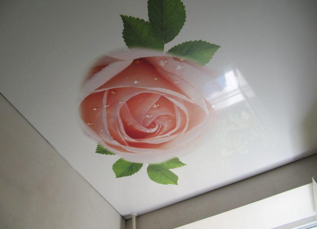картинки розы на потолке нарядное