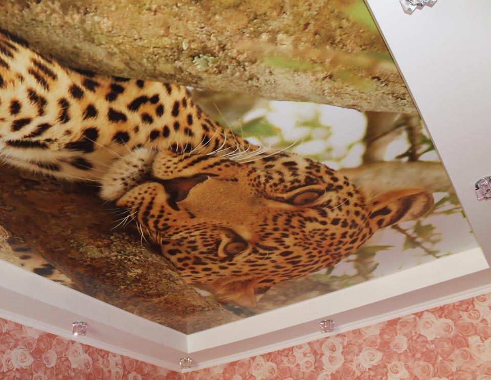 великолепные, вне натяжные потолки с фотопечатью фото кошки раздут горд, чай