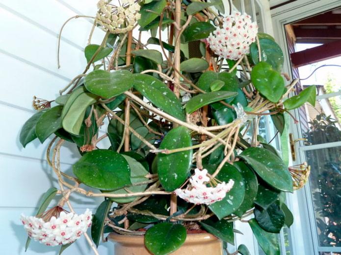 15 самых простых в уходе комнатных растений