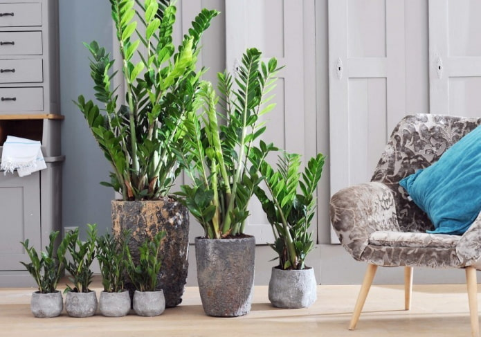 Неприхотливые комнатные растения: 15 примеров с фото и названиями (самые простые в уходе)