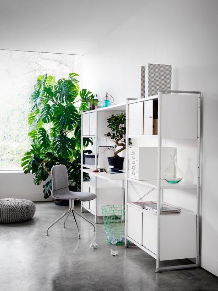 Вьющиеся комнатные растения: фото и названия (15 видов)