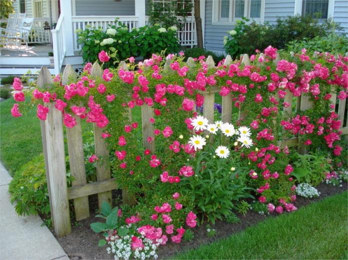 цветы возле деревянного забора