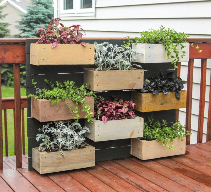 Декоративные растения в ящиках