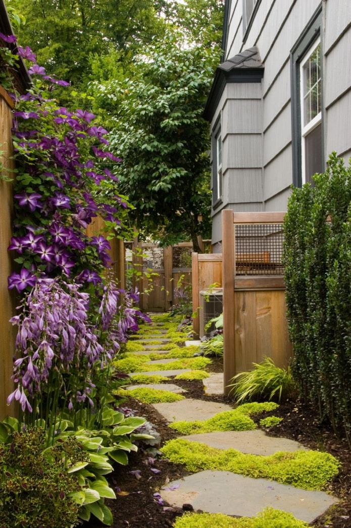 растения вдоль дома на участке