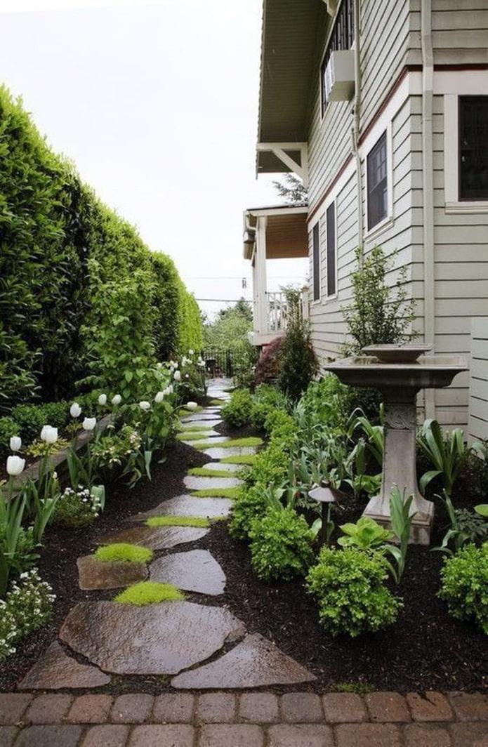 озеленение вдоль дома
