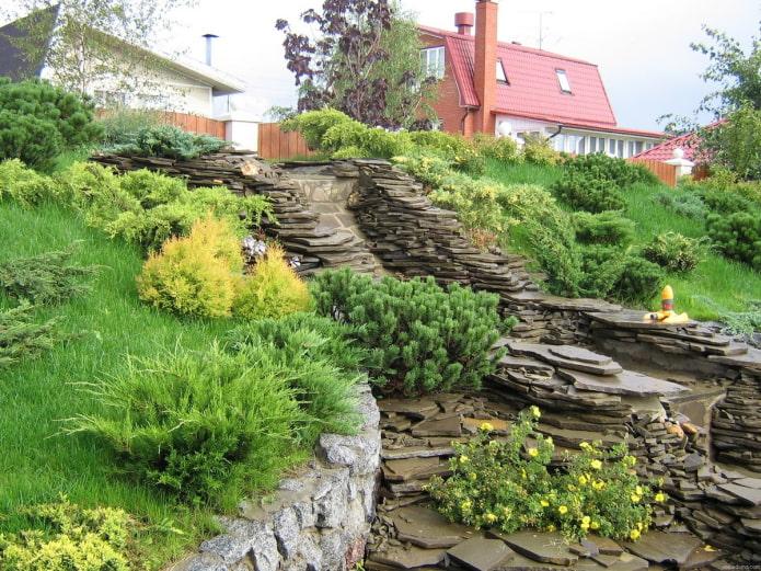 растения для горного склона
