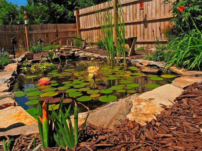 пруд с растениями в саду