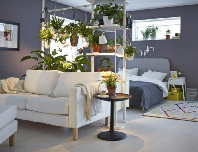 зонирование растениями