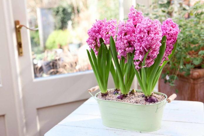 Какие цветы нельзя держать дома: ТОП-16 растений