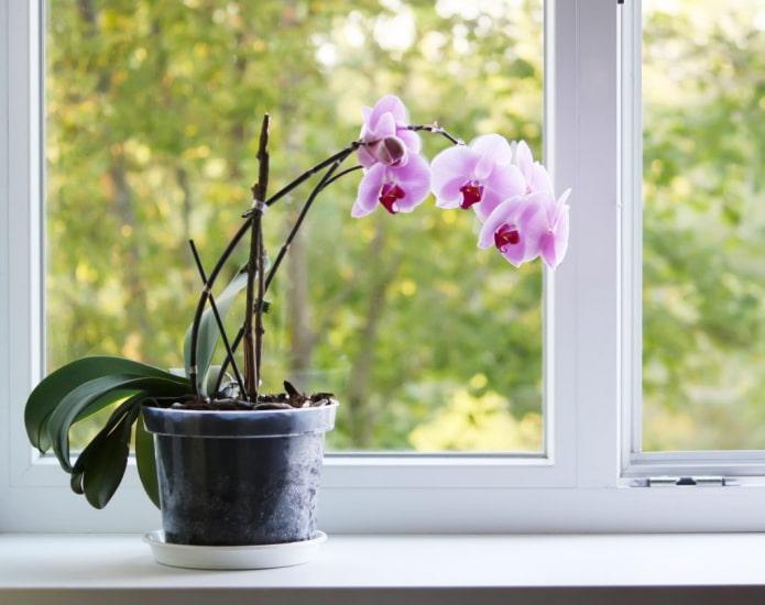 чем опасна орхидея