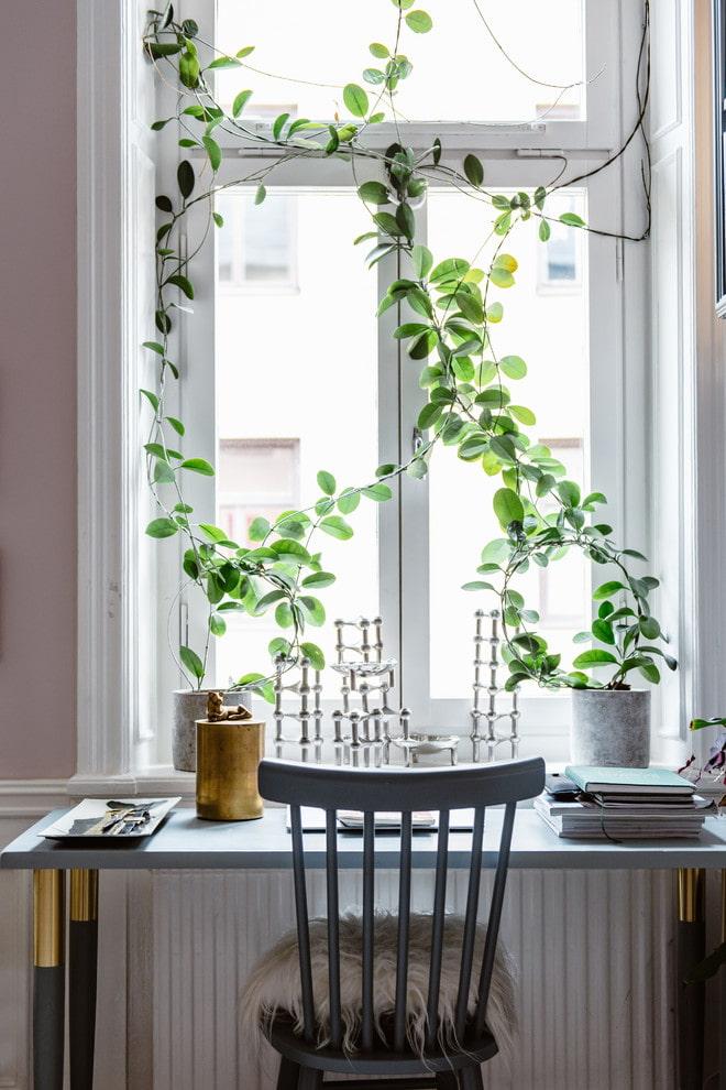 Растения вместо штор
