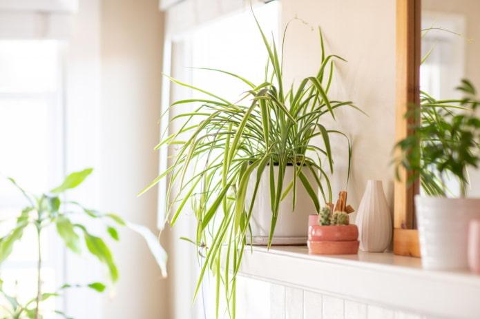 16 растений, которые обязательно должны быть у вас дома
