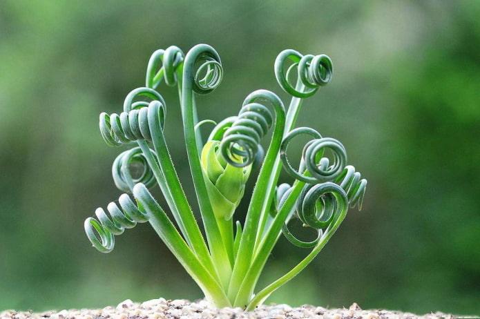 10 необычных комнатных растений (фото названия), которые удивят не только вас