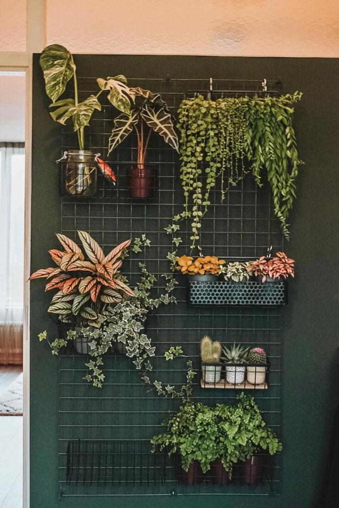 10 интересных идей, как расположить комнатные растения