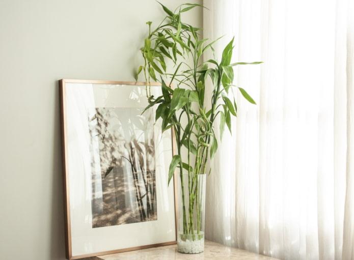 бамбук у окна