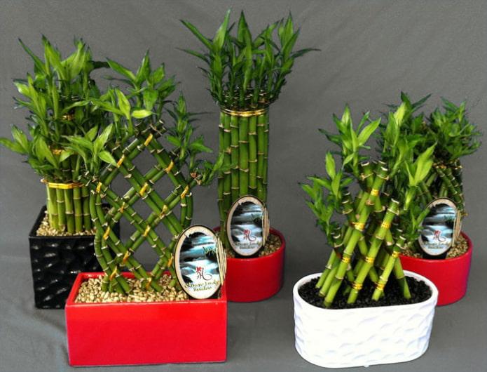 витой стебель бамбука