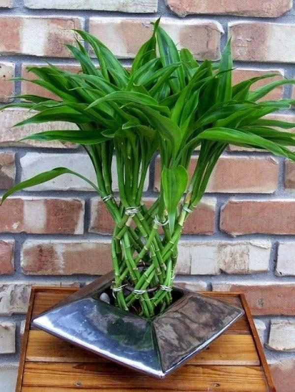 витой бамбук