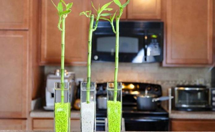 комнатный бамбук в кухне