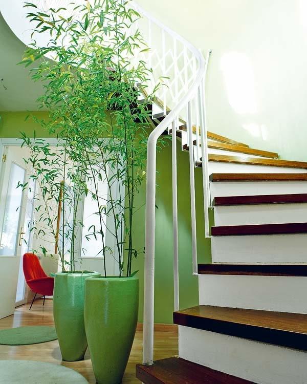 бамбук в горшках возле лестницы