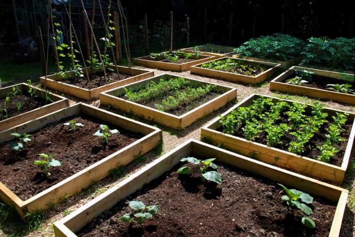 квадратные грядки в саду