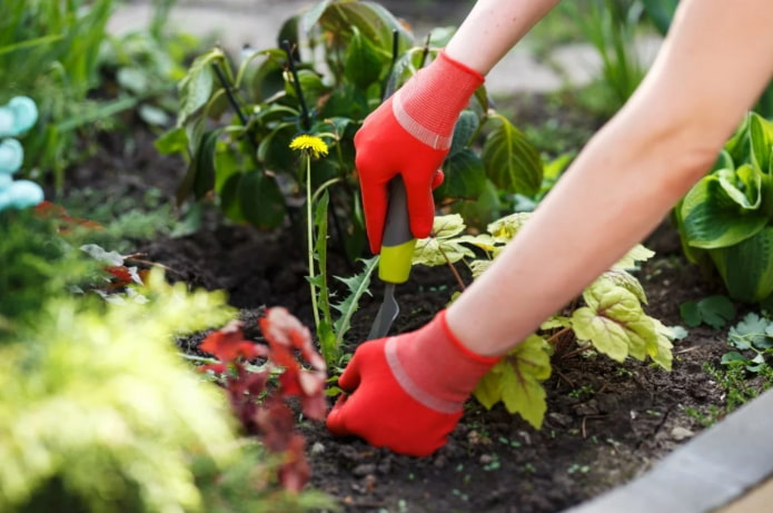 избавиться от сорняков на грядке