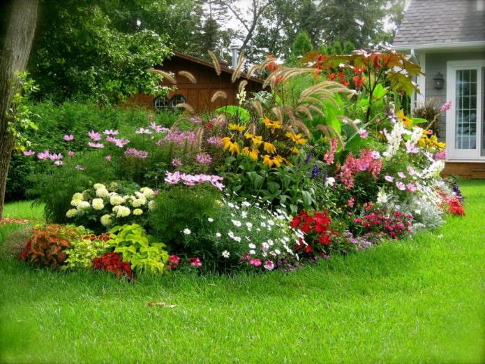 цветы в миксбордере