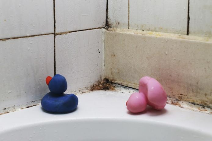 Грибок в ванной как вывести практические советы