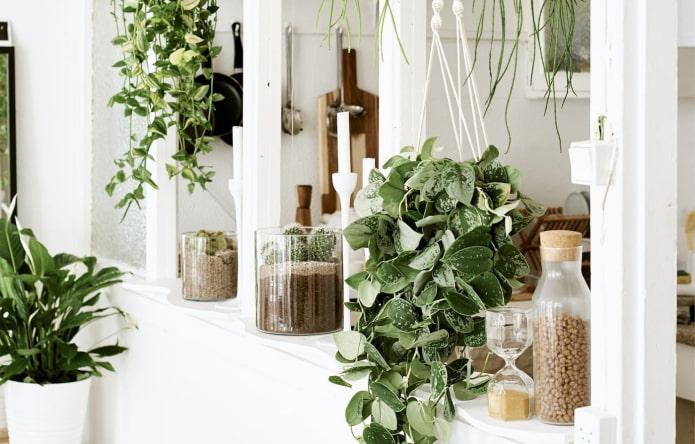 Подборка из 15 вьющихся комнатных растений