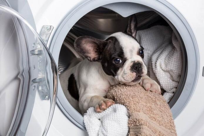 Нужно ли закрывать дверцу стиральной машины? (Разберем все за и против)
