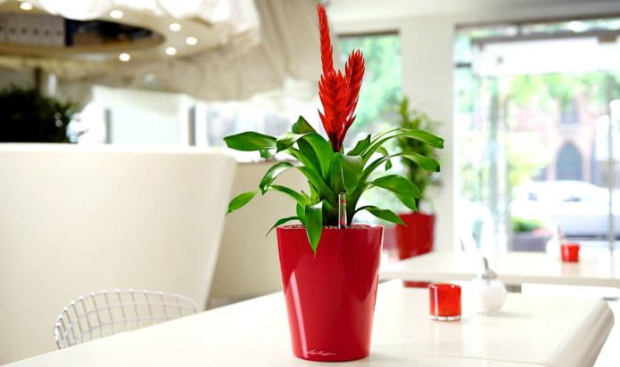 ТОП-16 растений, которые нельзя держать дома