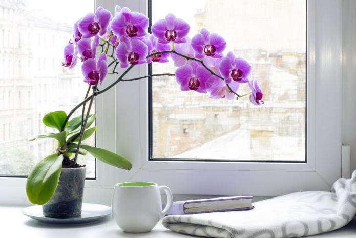 Какие цветы обязательно должны быть в доме?