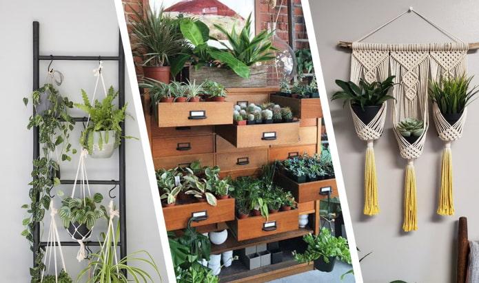 Как оригинально разместить комнатные растения?