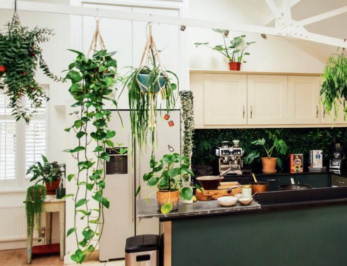 Какие растения можно использовать на кухне?