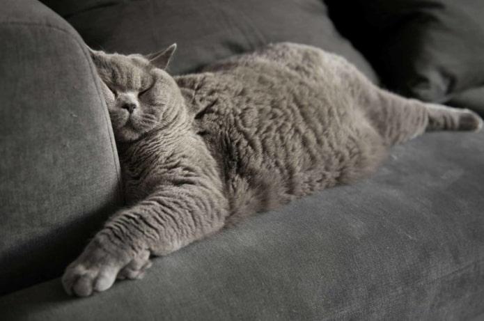 Как избавиться от шерсти в доме?