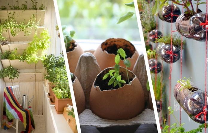 Как красиво разместить рассаду в квартире?