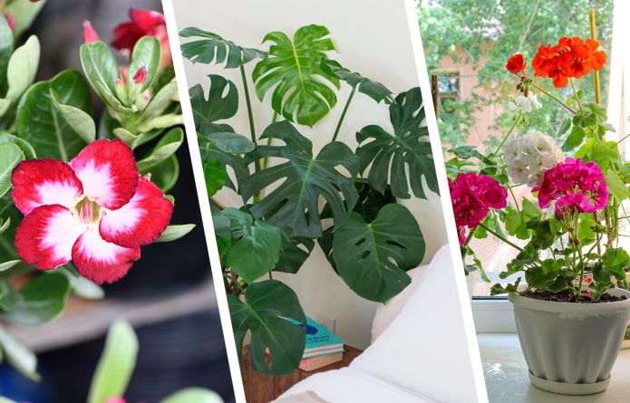 Комнатные растения, которым не место в спальне
