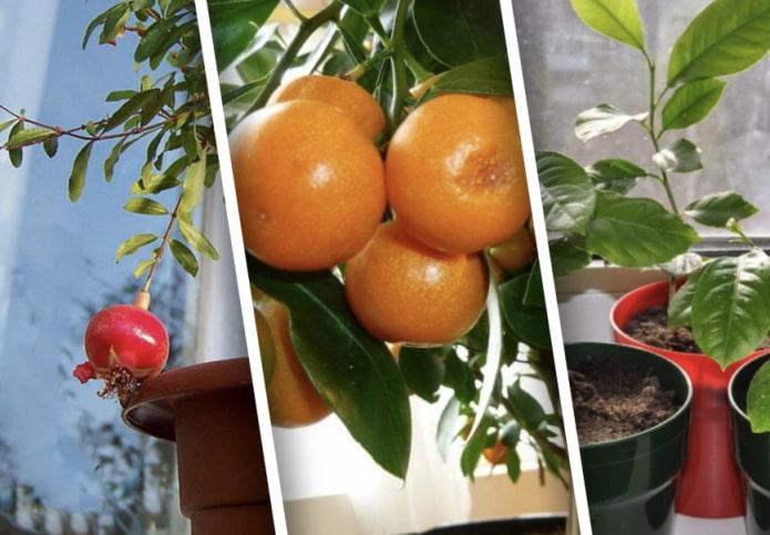 Какие комнатные растения можно вырастить из косточки?