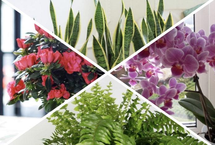 Хорошие и плохие растения по фен-шуй