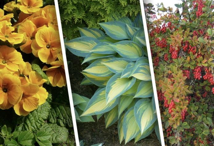Тенелюбивые растения для дачи