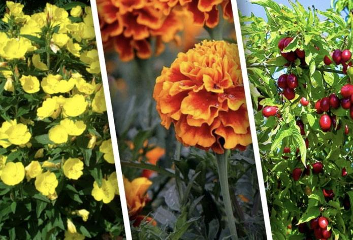 Какие неприхотливые растения посадить на даче?