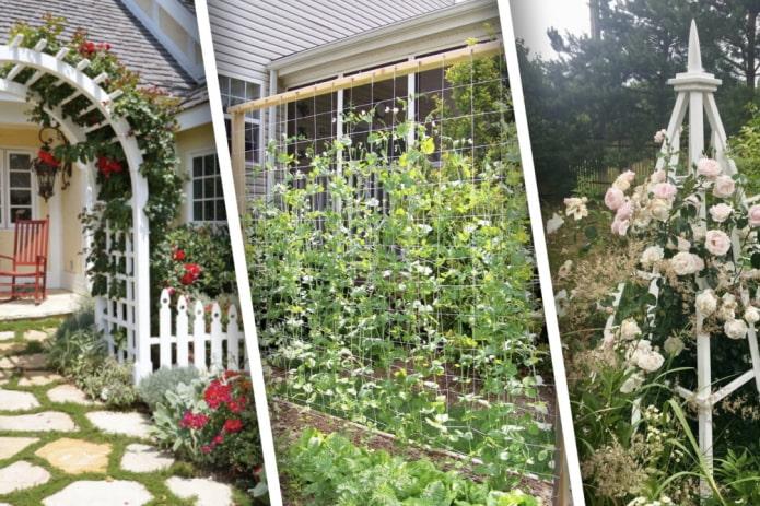 Опоры для вьющихся растений на дачном участке