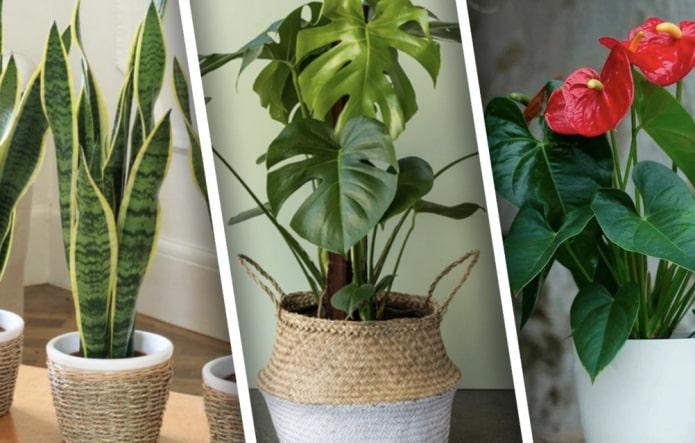 Какие растения хорошо растут прихожей?