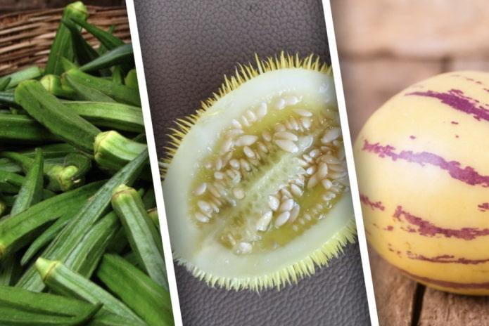 Какие экзотические овощи можно вырастить в наших краях?