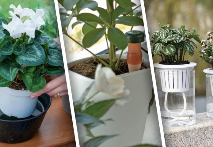 Как поливать комнатные растения во время отъезда?